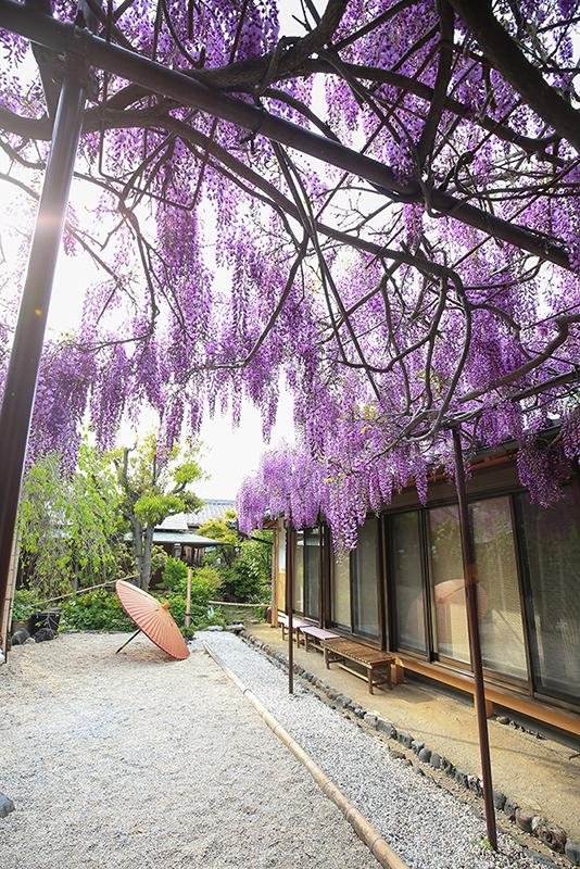 季節の花 撮影 大阪