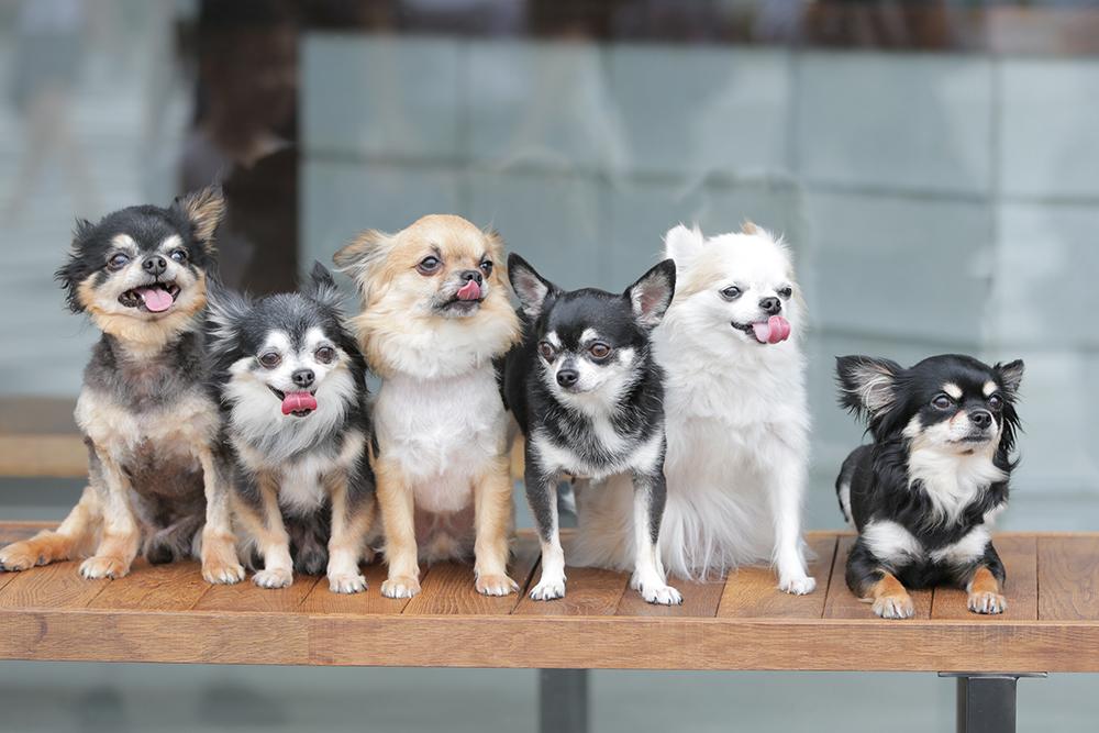 モデル犬 撮影