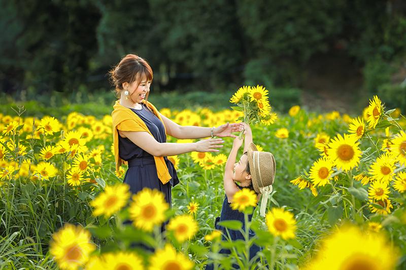 向日葵 柚遊農園