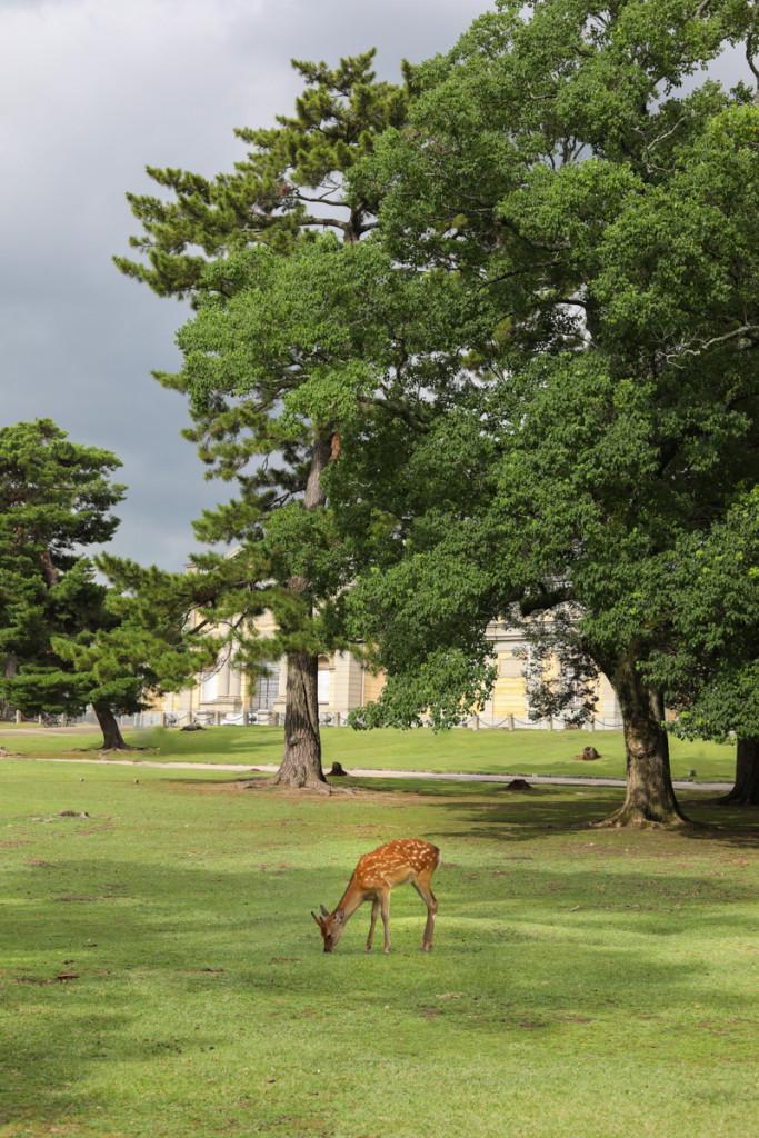 奈良公園 成人式撮影