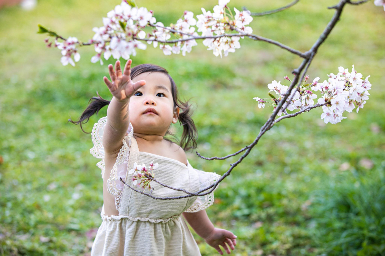 桜 キッズフォト